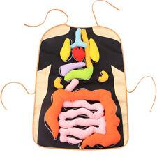 Avental De Órgãos Corpo 3D Brinquedo De Pelúcia intuitional Anatomia pré-Brinquedo Educativo