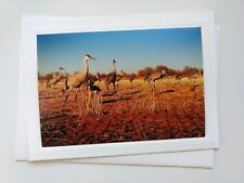 Sandhill Cranes 🌏🌻 Color photograph Blank Card w/ Envelope, Artist is Seller