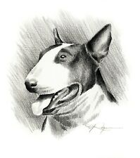 Bull Terrier Dog Pencil Drawing 11 X 14 Large Art Print by Artist Dj Rogers