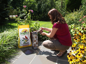 Sunflower Seeds For Wild Birds Four Season Black Oil 25 Lb Top Quality