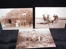 2 vintage photo postcards frontier animals Old West elk, kid on pig, cow on roof