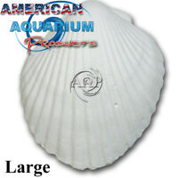 Original AAP Wonder Shell -Giant. Fresh NOT Clearance Product! Authorized Seller