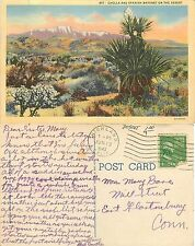 USA Cholla and Spanish bayonet on Desert YEAR 1943 SEND TO CONNECTICUT (F-L 004)