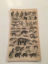 K10) Bat Monkey Kangaroo Skunk Lemur Mouse Nature LIII Original 1855 Plate