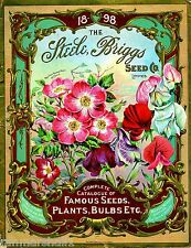 1898 - Steele Famous Vintage Flowers Seed Packet Catalogue Advertisement Poster
