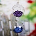 Clear Ball Glass Hanging Vase Bottle Terrarium Container Planter Pot Table Decor