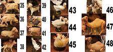 12 animali x PASTORI terracotta 10 CM costumi storici animal crib crèche bergers