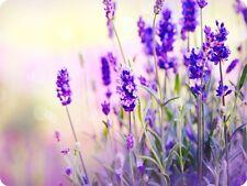Purple Lavender Flowers Glass Worktop Saver / Protector - Large - 50 x 40cm