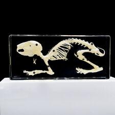 Animal Rabbit Skeleton Specimen Resin Paperweight Rabbit Bone Model Taxidermy