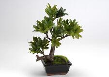 BONSAI Podocarpus Piante finte artificiali
