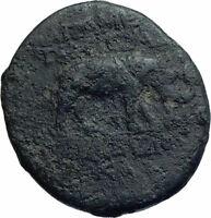 APAMEIA in Seleukis Authentic Ancient 77BC Greek Coin w ZEUS ELEPHANT i78417