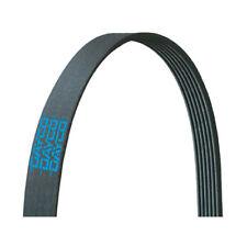 DAYCO 5080690 - Poly Rib Gold Label Belt