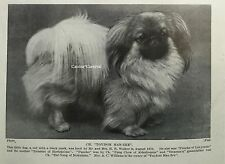 Very Cute Ch Pekingese Toydom Man-Zee British 1934 Vintage Photo Print
