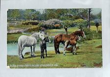 A1114cgt Animals Horses Mares with Foals W&K vintage postcard