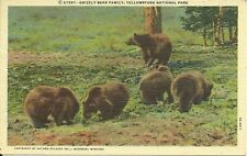 NICE VINTAGE LINEN POSTCARD GRIZZLY BEAR FAMILY IN YELLOWSTONE NATIONAL PARK