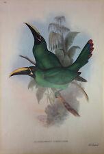 Aulacoramphus Atrogularis by John Gould