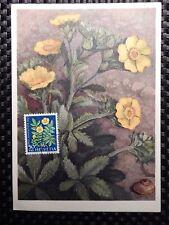 SCHWEIZ MK 1961 746 BLUMEN GÄNSEFINGERKRAUT MAXIMUMKARTE MAXIMUM CARD MC CM 7789