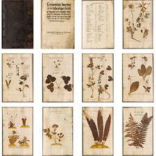 MANUSCRIPT Botanical HERBARIUM VIVUM 1576 - 1600 on CD