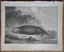 Cook: Animals Otter - 1774