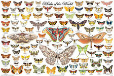 MOTHS OF THE WORLD POSTER (61x91cm) EDUCATIONAL WALL CHART DIAGRAM COLLECTABLE