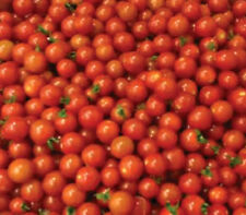 TOMATO sweetie 25 seeds for your edible vegetable garden SWEETEST CHERRY TOMATO