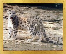 Leopard in Snow Wildlife Animal Wall Decor Golden Framed Art Print Picture 18x22