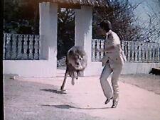SAVAGE HARVEST; LION THRILLER W/TOM SKERRITT; 1981-DVD