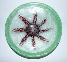 WMF IKORA, Obstschale, Glas  27,0 cm, Marmorisiert