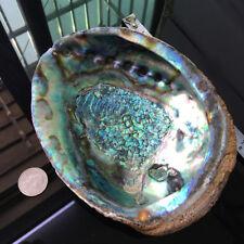 "16cm Abalone Shell Sea Ocean Natural Seashell Decor 6"" Soap Storage Ornament DIY"