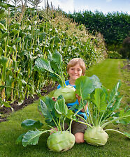 2g (app.800) giant kohlrabi seeds SUPERSCHMELZ grows up to 10kg HEIRLOOM swiss