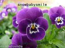 100 Viola Tricolor Seeds Johnny Jump Up Violet Flower Hardy Perennial Mix Color