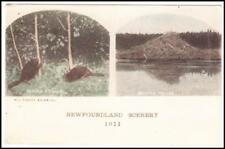 Newfoundland SG#118(single frank)-CURLING B.O.I. 1/SP/16-Scarce Postcard View