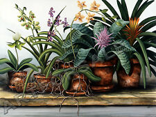GREENHOUSE FAVORITES 19 1/2 x24 3/4 BROMELIADS & ORCHIDS SIGNED James Partee Jr.