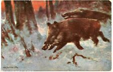 Chasse. Hunting. Sangliers. Wild Boar.