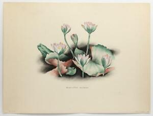 Great Depression Artist ALICE DINNEEN Blue Lotus VINTAGE 1947 Lithograph #542