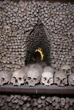 Post Mortem Bone Wall Photo 477 Bizarre Odd Strange