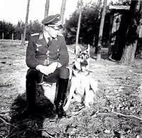 WWII Photo Luftwaffe Officer with German Shepard Dog WW2 B&W World War Two/ 2389