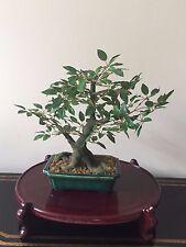 Bonsai Artificial Tree 16 Inch In Ceramic Planter