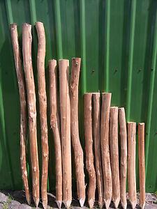 Zaunpfosten Staketenzaun Haselnuss Pfosten Staketenpfosten Holzpfosten Stakete