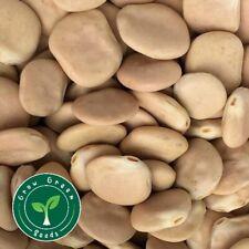 50 seeds of Lupin - LUPINUS - Lupine + 5 seeds Sunflower