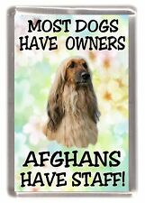 "Afghan Hound Dog Fridge Magnet ""Most dogs ......Afghans Have Staff!"" - Starprint"