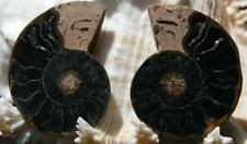 "1245 Rare 1 in 100 Black Ammonite Pair Deep Crystals Md Fossil 30grams 48mm 1.9"""