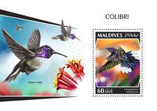 Maldives 2018  Colibri birds fauna   S201810