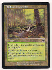 MTG Magic ONS - Tranquil Thicket/Halliers tranquilles, French/VF