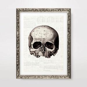 HALF SKULL HEAD UNUSUAL QUIRKY ART PRINT Poster Decor Wall Chart Illustration