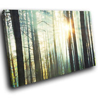 SC392 Forest Trees Sunset Nature Landscape Canvas Wall Art Large Picture Prints