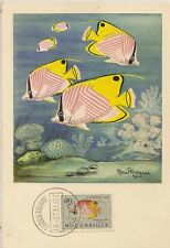 CARTE POSTALE MAXIMUM MARCEL BOURGEOIS POISSONS DE MOZAMBIQUE 1955