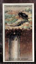 Tobacco Card, Lambert Butler, WONDERS OF NATURE, 1924, Trap Door Spider, #20