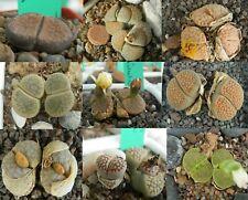 Lithops 50+ Fresh Seeds 9 mixed types mesemb Living Stones