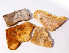 100% Natural Good Quality Fossil Coral lot Huge 179.75Cts Slab Rough Loose Gems